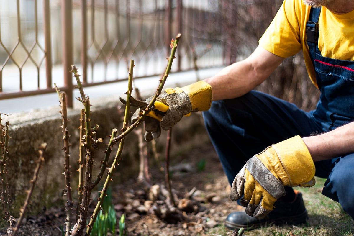 Gardening 101 - July